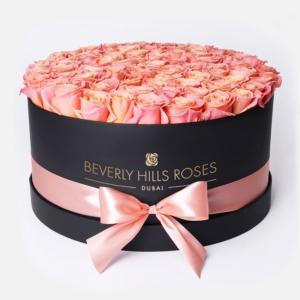 Peach roses in 'Blush'