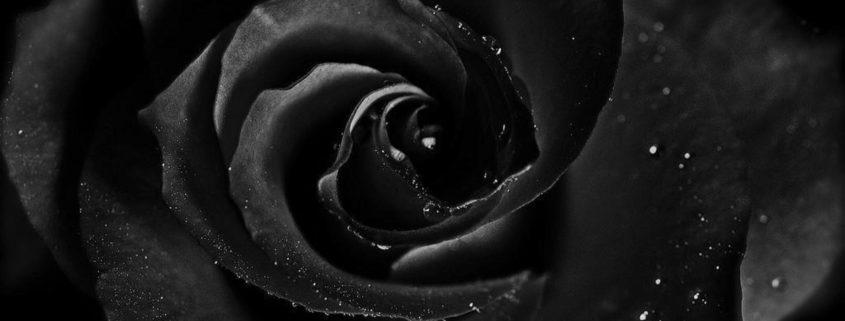 black rose rose box
