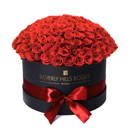 Red roses in 'Hollywood Globe' – Large black box