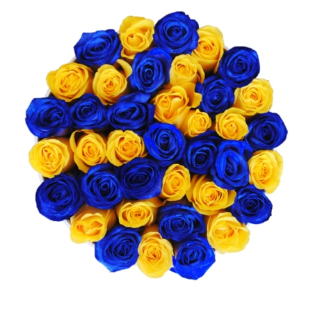 Blue & Yellow roses in 'Sunny Lagoon' – Medium white box
