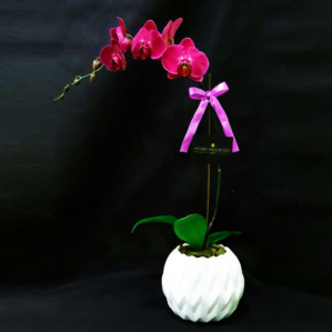 Purple Orchid in White Vase