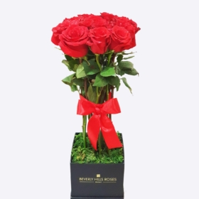 Red roses in 'My Love'