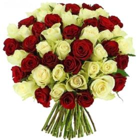 Roses in 'Sensational'