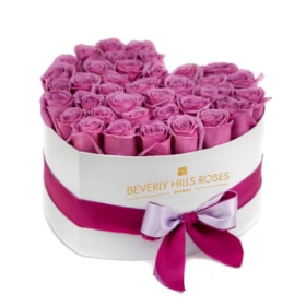 Purple-Pink roses in Candy